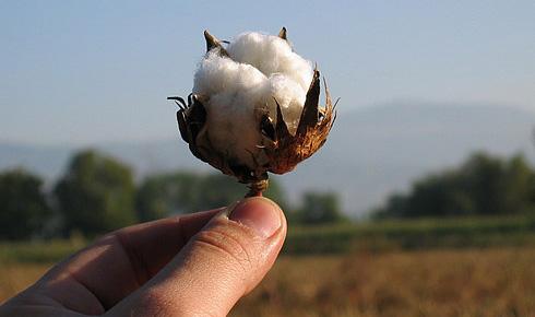 Хлопок. Что такое органический хлопок (Organic cotton)?